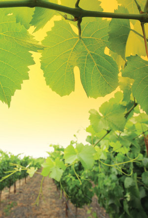 Organic Wines of North America